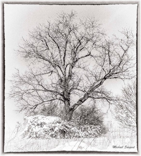 TREE PRINT
